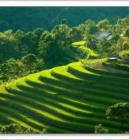 Bán vỏ Dunlop Tỉnh Lai Châu