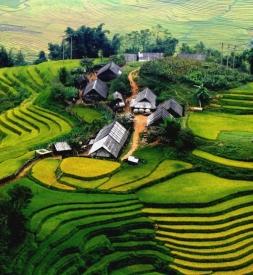 Bán vỏ Dunlop Tỉnh Lào Cai